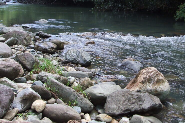 Carabali Rainforest Park Mameyes River Puerto Rico