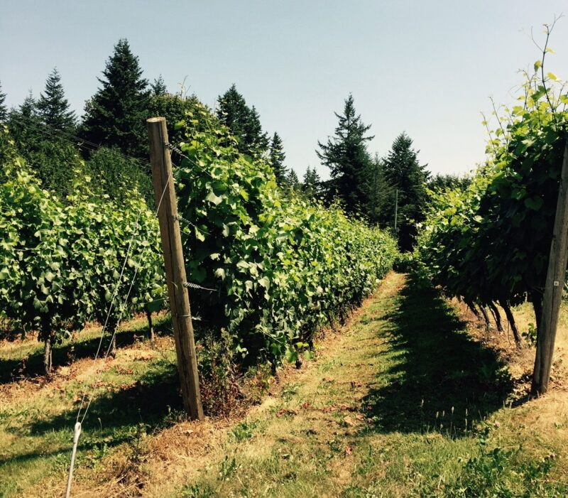 Township 7 Vineyards & Winery Vines