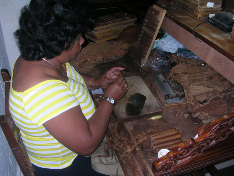 Cigar Roller in the Partagas Factory Havana Cuba