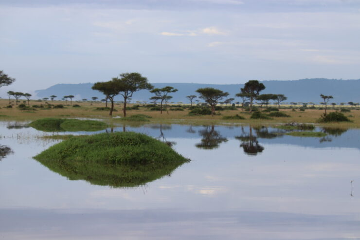 Pond After Rain in the Maasai Mara Kenya