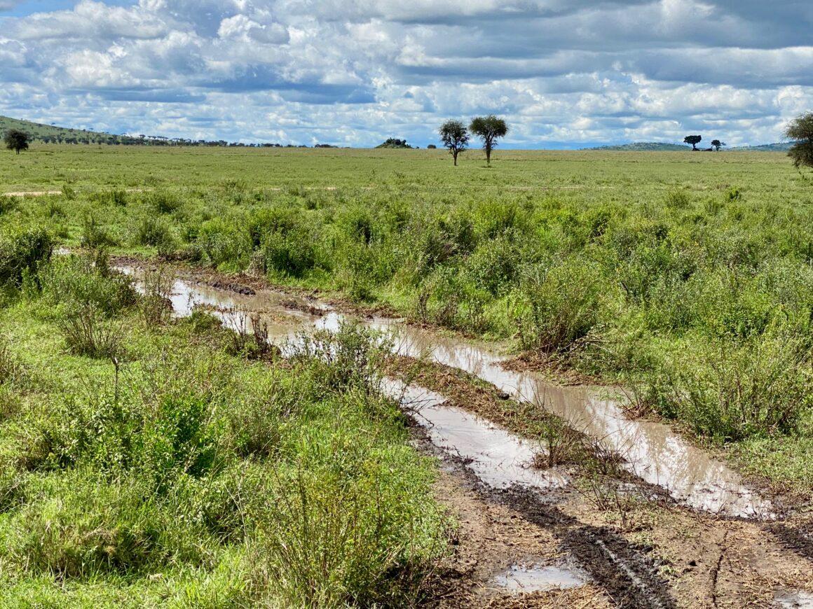 Serengeti rain drenched safari trails
