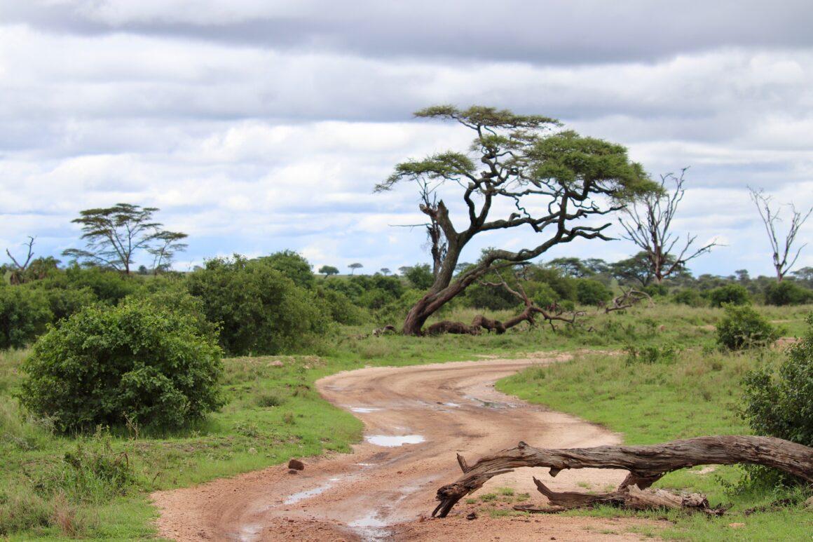 Serengeti safari roads