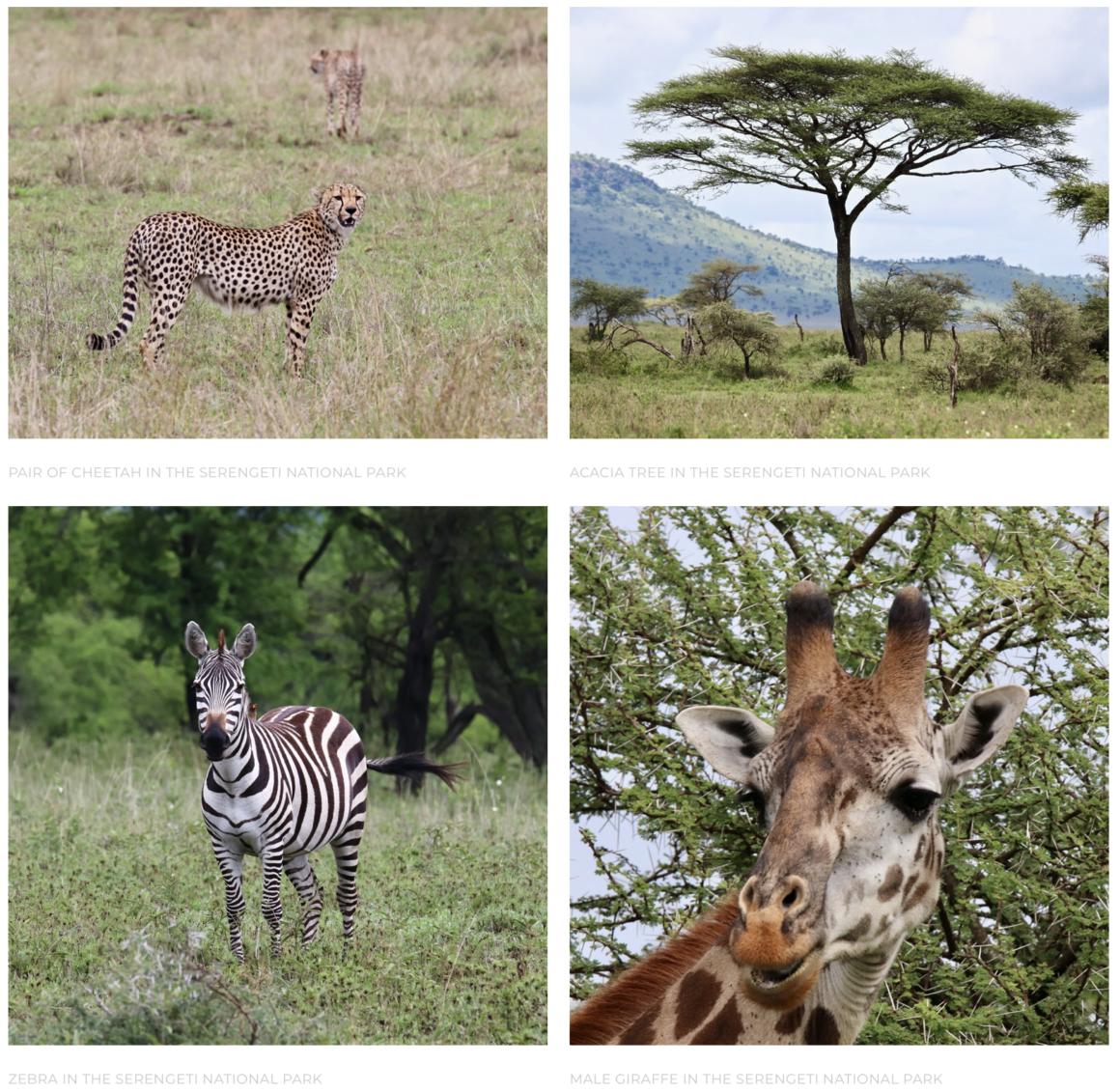 serengeti photo gallery
